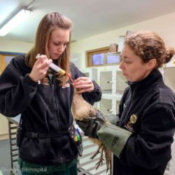 Vale Wildlife Hospital image