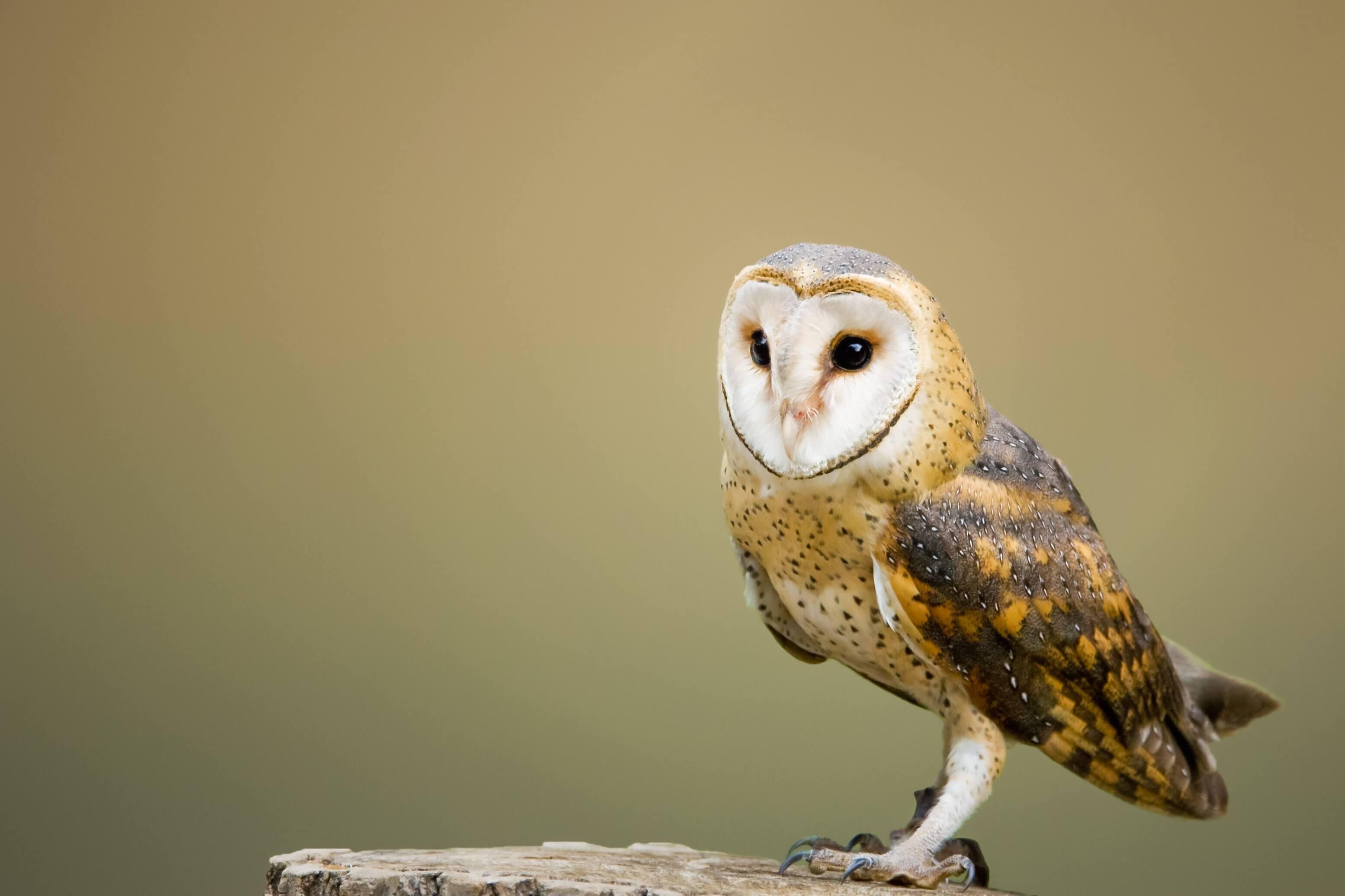 Barn Owl Centre image
